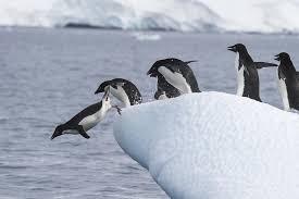 firstpenguins