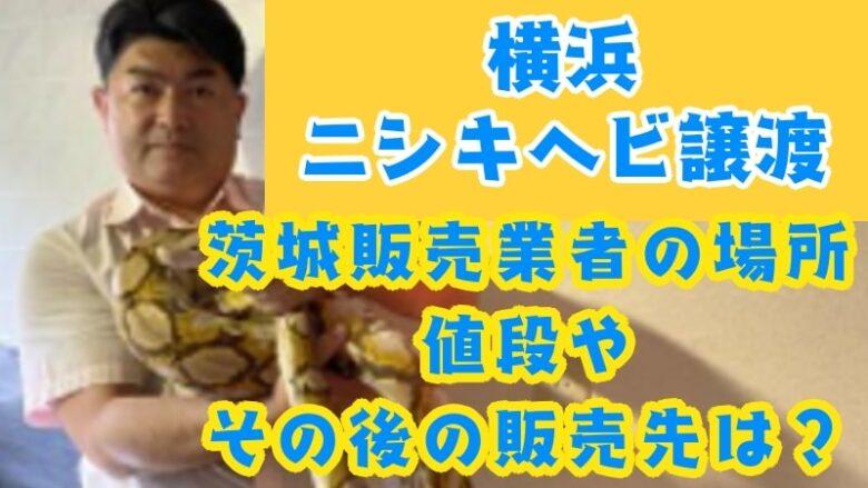 yokohama-amimenishikihebi-ibaraki-price