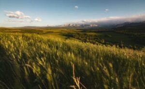 canada wheat-fudo