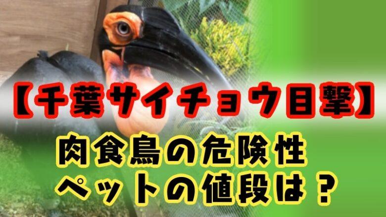 minamisaicho-chiba-kasiwa-nikushoku-bird-dasso-zetsumetsukigushu