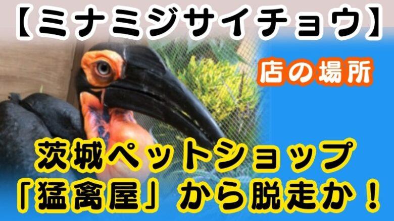 minamijisaicho-ibaraki-petshop