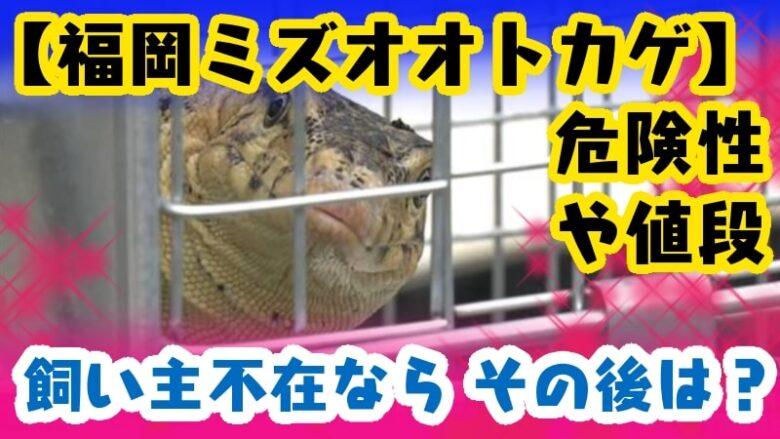 fukuoka-mizuotokage-risk-price