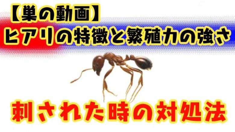 hiari-feature-now-japan-symptomatology-size-image-nest-fecundity